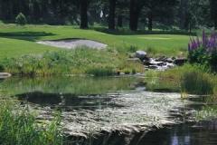 Pond on 14